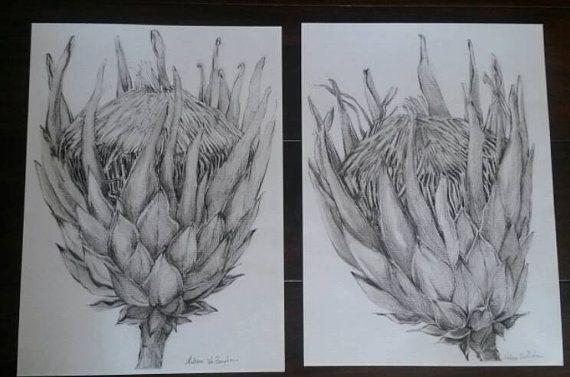 King Protea Charcoal Drawings: Pair