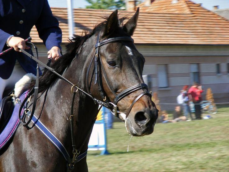 Balástyai lovasnap (díjugratás) 2009-10-03