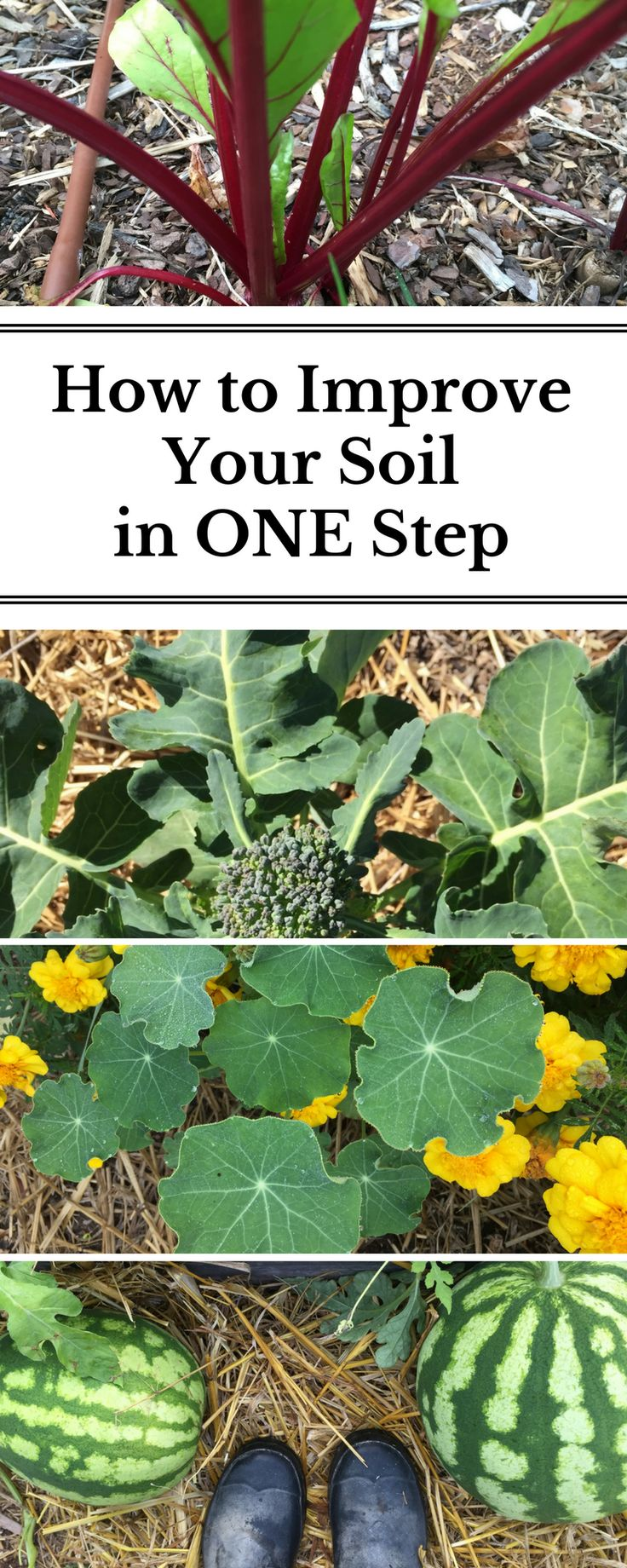 A super simple step to improve the overall health of your soil!
