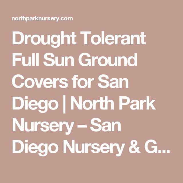 Drought Tolerant Full Sun Ground Covers for San Diego | North Park Nursery – San Diego Nursery & Garden Center