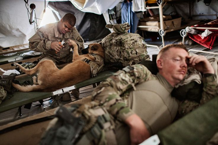 photo essay about u.s. war dogs These dogs are worth their weight on gold to our service people check it out war dog - an fp photo essay by rebecca frankel | foreign policy.