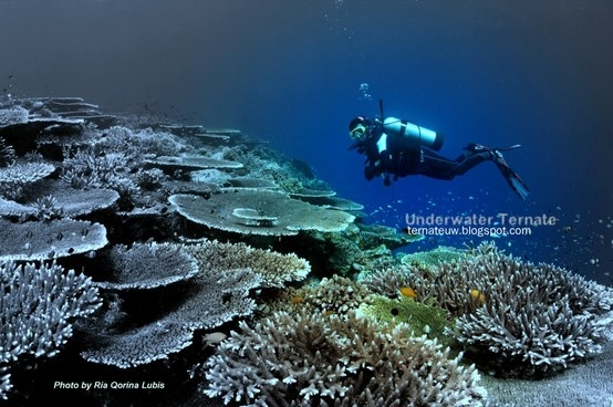 Untouched shallow reef at Tanjung Konde-Tidore