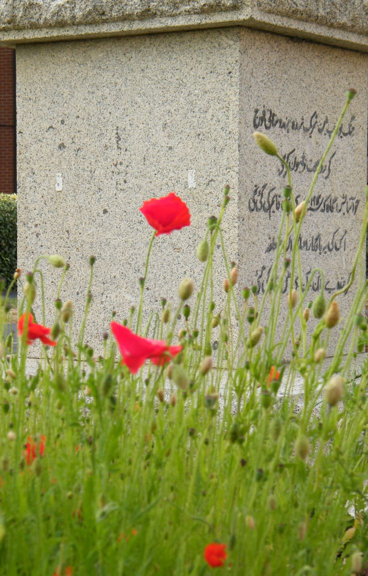 Flanders poppies, July 2014 in full bloom opposite Memorial commemorating the establishment of a convalescent hospital for Indian troops at Barton-On-Sea, Hampshire, in 1914. ©Come Step Back in Time