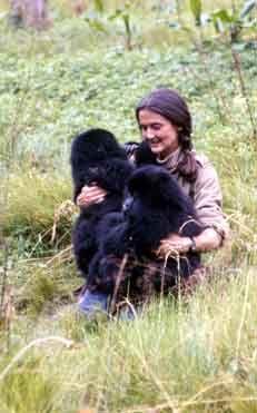 17 Best Ideas About Mountain Gorilla On Pinterest