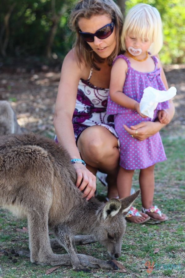 Meet Kangaroos at Symbio Wildlife Park, Australia