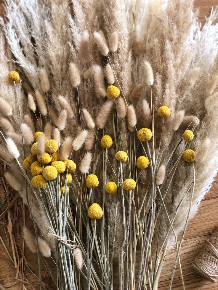 Billy Balls 20 Pcs Bunny Tails Dried Bouquet Craspedia Billy Buttons Pampas Grass Yellow Dried Flowers Wedding Bouquet Home Decor Dried Flowers Dried Bouquet Dried Flowers Wedding