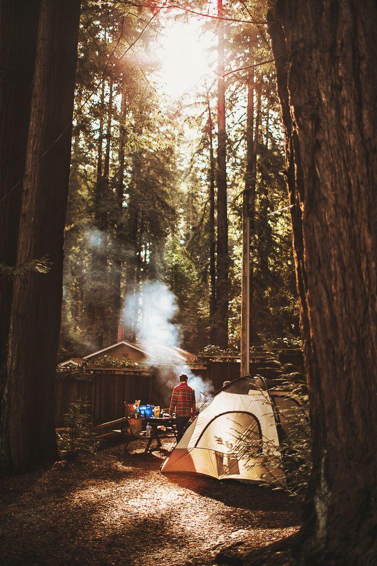 Camping in Redwoods   Nessa K