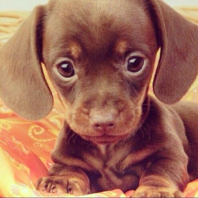 Sooooo cute!!