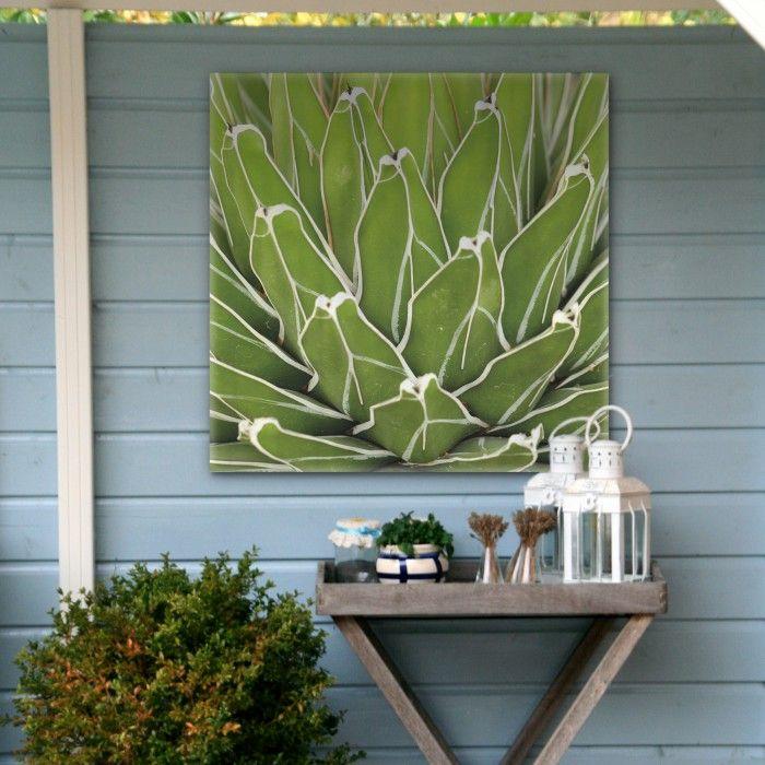 Tuinschilderij - Vetplant Blad Groen (60x60 cm)