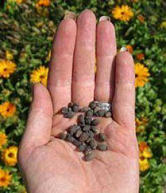 Die 7 häufigsten Fehler beim Aussäen von Saatgut im Haus