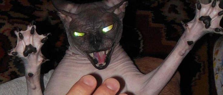 20 gatos que parecem ter feito um pacto com Satã - Mega Curioso
