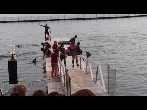Dolphin Show at Subic Bay Philippines