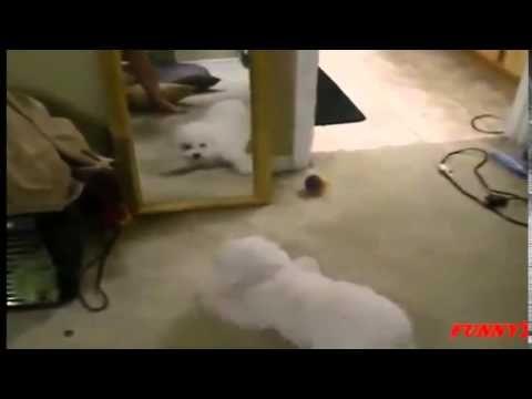 Funny Pranks - TOP 50 Funny Animals vs Mirror