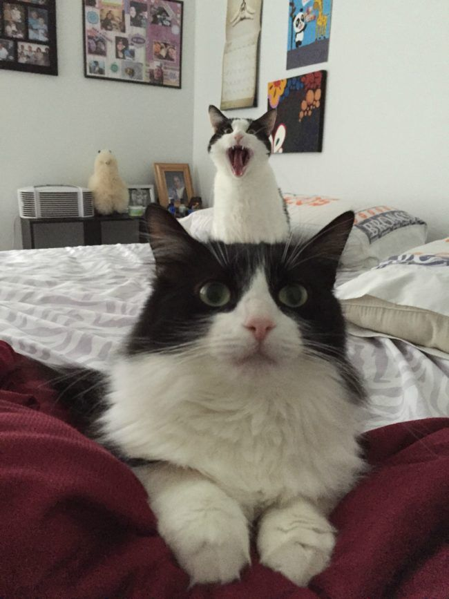 Catphotobombs When Youre In A Twocat House Theres Bound To - 20 hilarious cat photobombs