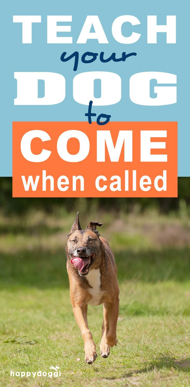 How to Teach Your Dog to Come When Called-7 proven tips used by experienced trainers to help you train your dog.
