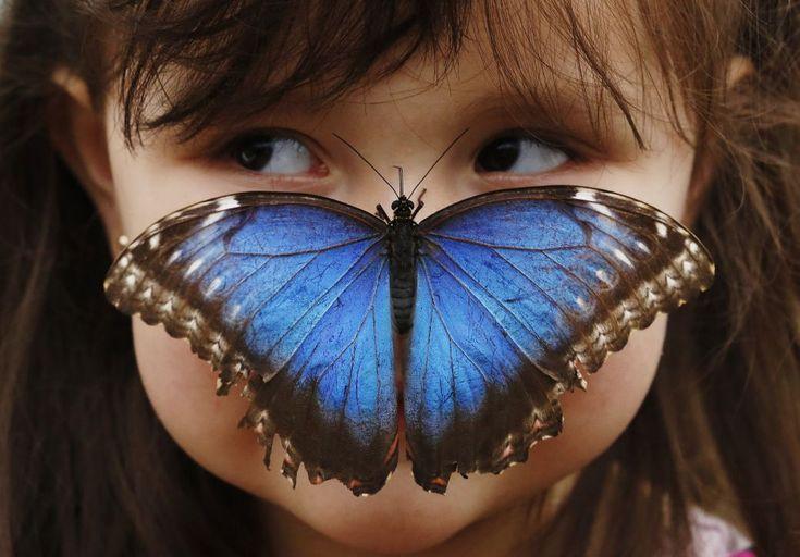 Londres, Reino Unido, 25 de marzo de 2013. Una niña de tres años posa con una mariposa Morpho azul posada en su nariz en una exhibición sobre lepidópteros en el Museo de Historia Natural de Londres. Foto: Reuters.