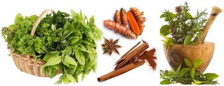 Ottawa Valley Dog Whisperer : Herbs, Spices Good for Dogs, Cats, Bad for Dogs, Cats - Uses, Dosage