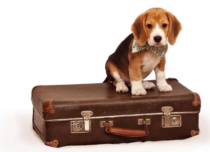 Lo que debes tener en cuenta al viajar con mascotas!