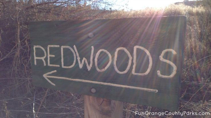 Redwoods in Brea: Hike a Dusty Trail to Reach the Lush & Shady Grove