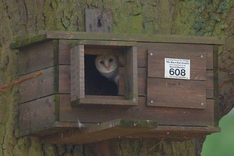 Build a Barn Owl House | Barn Owl Box Plans http://homelandsbedandbreakfast.blogspot.com/2010 ... Could do this too.