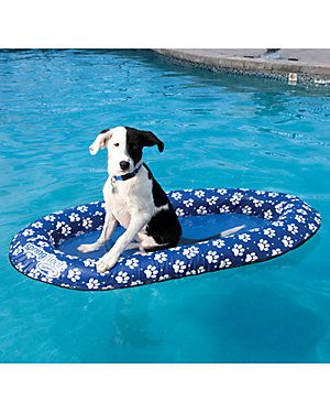 Paddle Paws Pet Float! What fun! Check it out!
