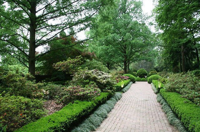Opt for evergreens like boxwood shrubs — often used in formal landscaping — to give your yard color year-round. Check out Gardening Know How for tips on planting and growing boxwoods.