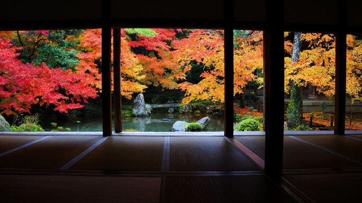 京都 蓮華寺 紅葉 Japan,Kyoto,Renge-ji temple,autumn leaves,colored leaves