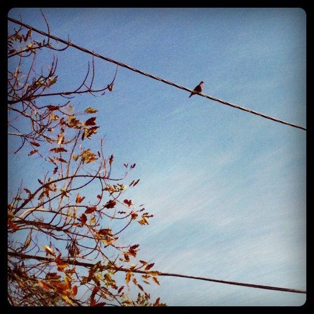 Santiago. Sky. Bird. Autumn.