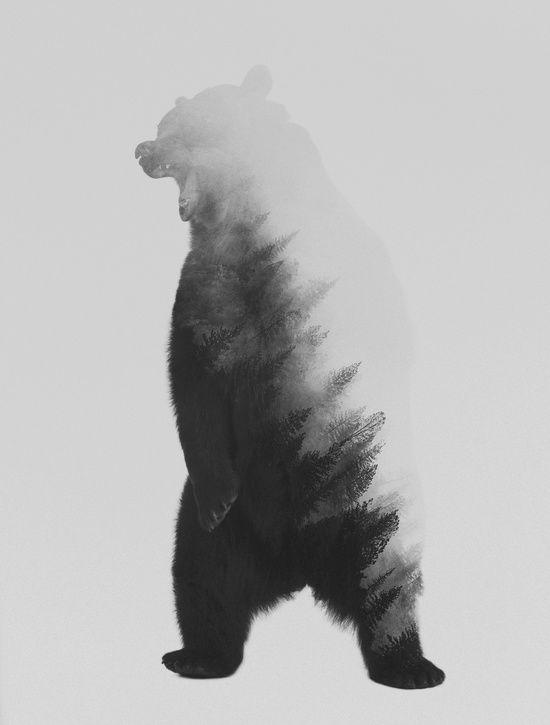 Roaring Bear (black & white version) Art Print