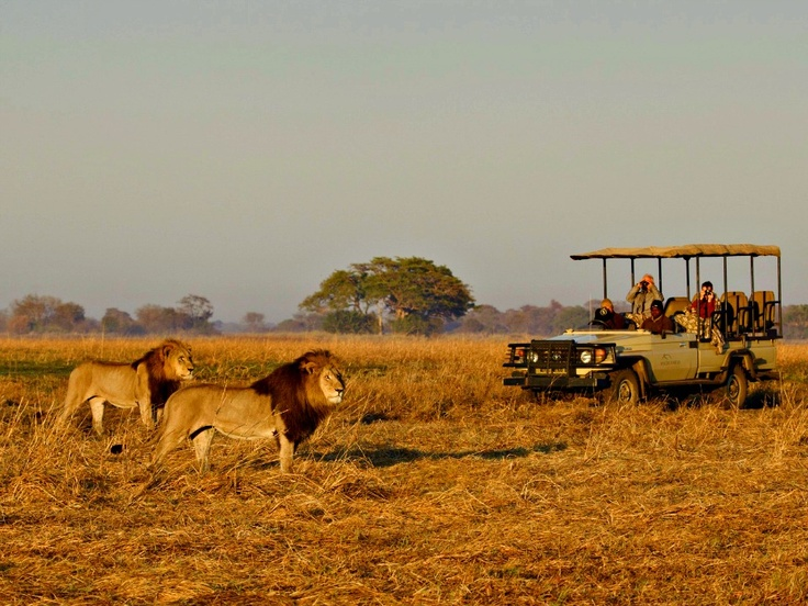 The Busanga plains in Zambia's Kafue National Park is known for its vast grassy plains, rich with animals. #bestafricavacations