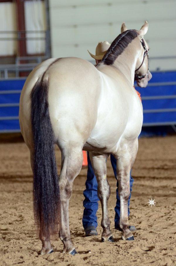 1000+ Bilder zu ❤ Horse Show Stuff ❤ auf Pinterest | Reiter-Probleme, Barrel Race und Westernspaß