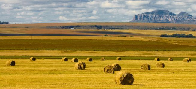 Hay bales between Bloemfontein and Clarens in the Free State, South Africa.  © Chris Marais
