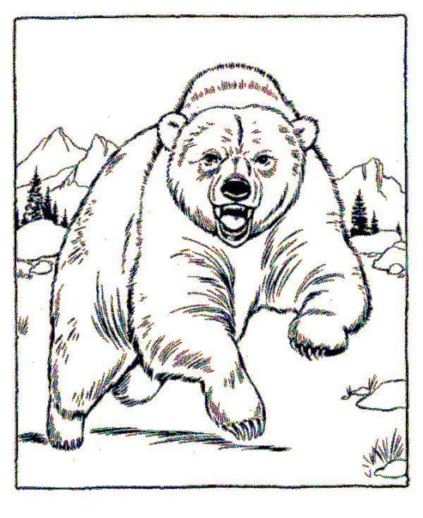 Angry Polar Bear Coloring Page Zoo Animal Coloring Pages Animal Coloring Pages Bear Coloring Pages