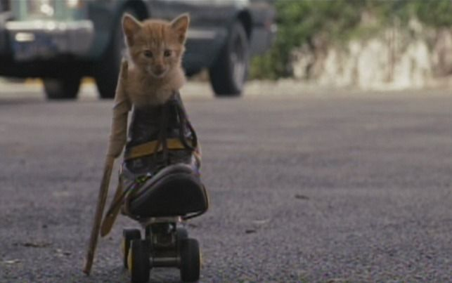 A one-legged kitten in a roller skate with a crutch makes a very brief appearance in The Brothers Bloom (2008).