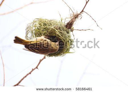 Female Weaver
