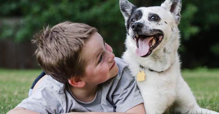 Can Dogs Be Autistic? Some Symptoms To Diagnose It: https://thepetadvice.com/can-dogs-be-autistic/