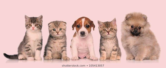 Puppies And Kittens Wallpaper Very Cute Kittens Wallpaper 9699