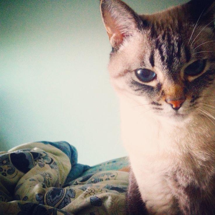 Piki ... my amazing cat!
