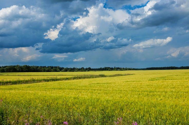 Barley Field in August, Finland, by Heikki Rantala