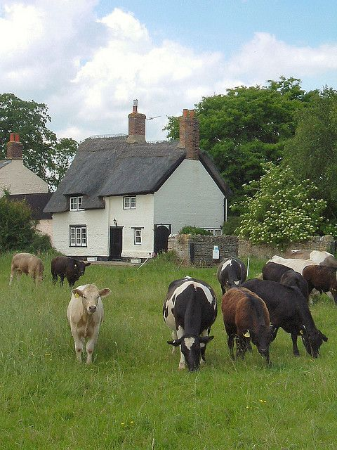 Look at that perfect thatched roof in this country scene from Oxfordshire! I love the cows, but that roof deserves attention.