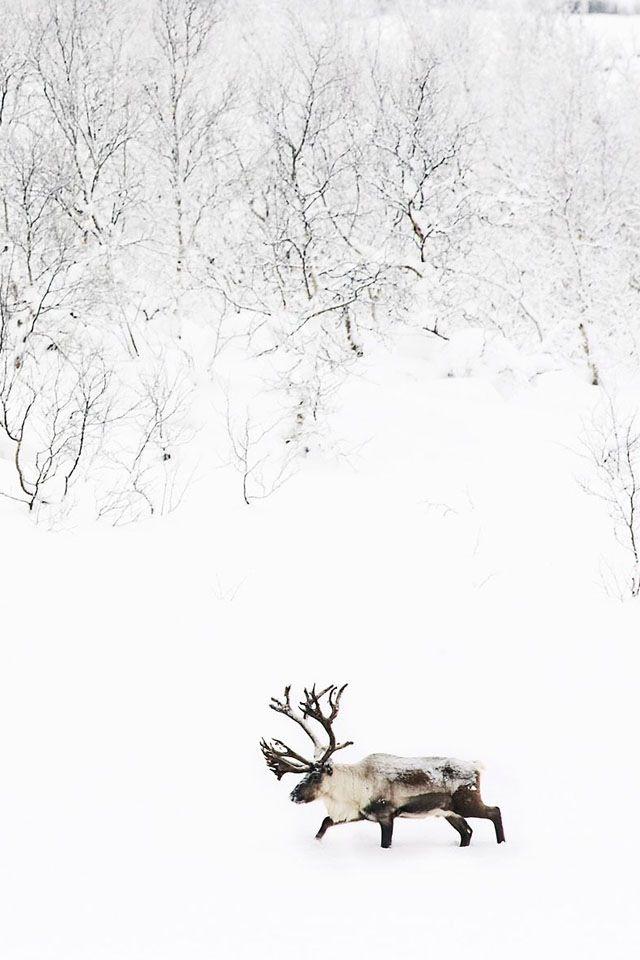 mooseReindeer, Nature, Beautiful, Snow, Winter Wonderland, Christmas, Each, Animal