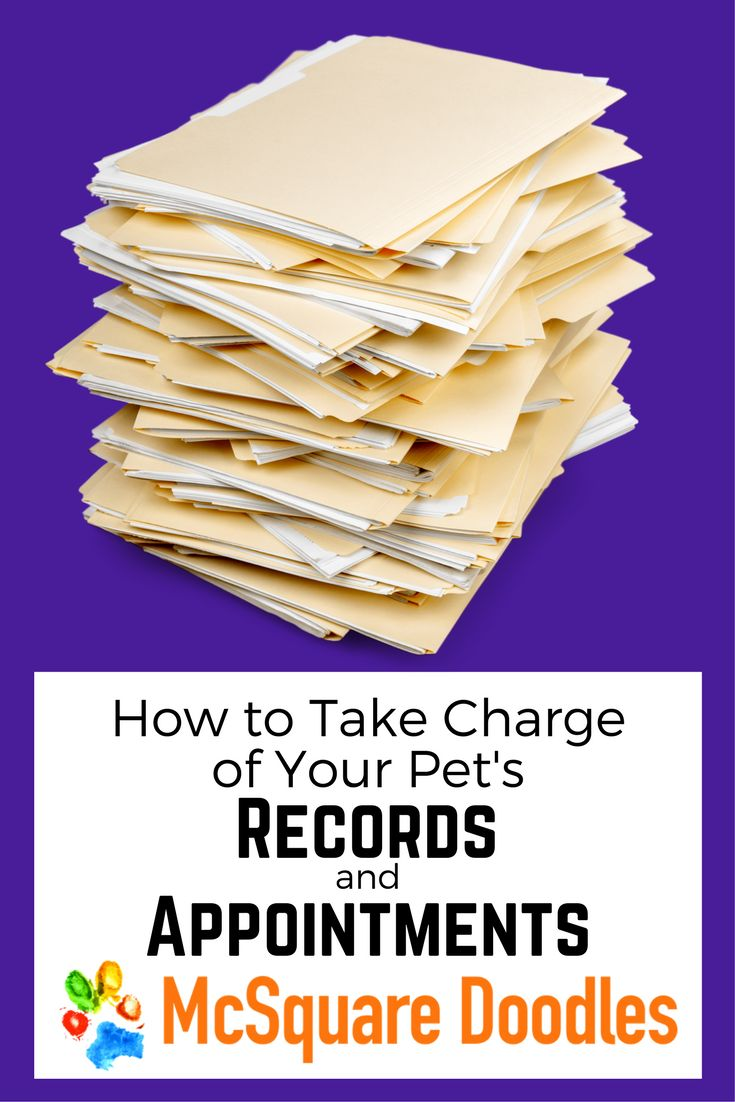 Overwhelmed by the number of records you're accumulating on your pet? Is your pet's schedule more complicated than yours? Read on for tips from this OCD dog mom about organizing all of those records and appointments.