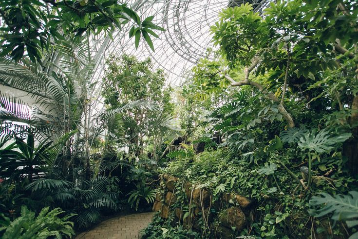 Take a tour inside the Tropical Greenhouse of Yumenoshima in Tokyo, Japan.