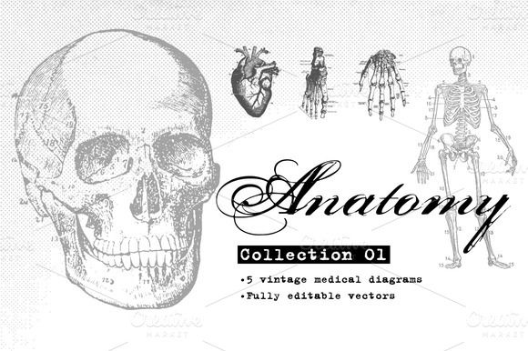 Anatomy Vector Collection 01 by Offset on Creative Market