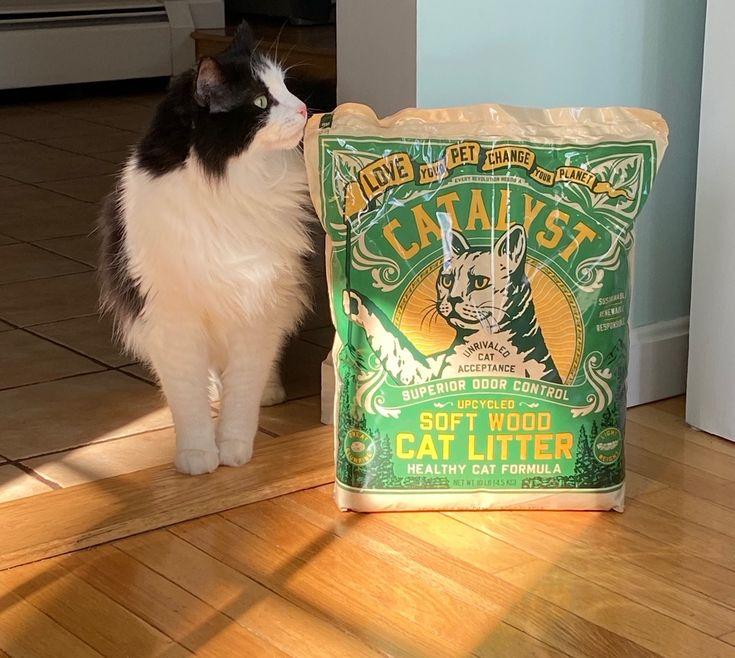 Catalyst cat acceptance love your pet best cat litter