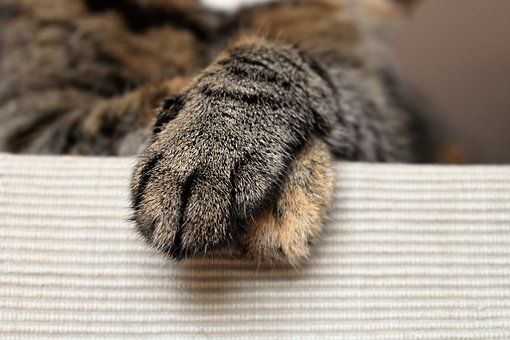 Cats Paws, Animal Paw, Cat'S Paw