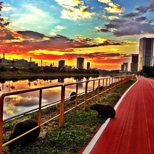 O Rio Pinheiros, a ciclovia e as capivaras. Clique feito por @cris_nasci http://instagr.am/p/K7l3gMlHkT