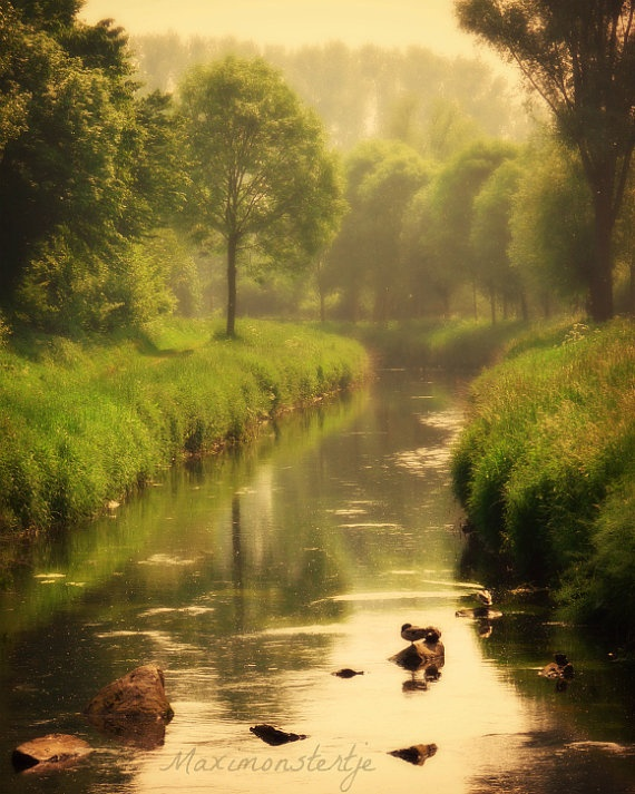 Nature Scenery Photography Forest River by Maximonstertje on Etsy, $30.00
