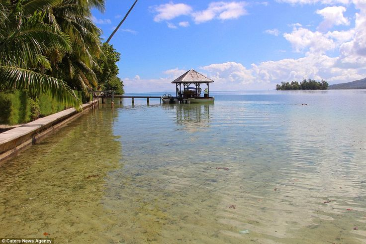 Pictured: The wharf viewed from shallow water, with palm trees to the left and the open water in the distance. The property's lush tropical gardens allow for views across the lagoon to the mountains beyond. But despite the timelessness of Motu Tiano, new owners can relax knowing that the island home is fitted with mods cons, including electricity, water, internet and mobile phone service. The beautiful water, however, is likely to occupy most of the owner's time - with swimming, scuba…