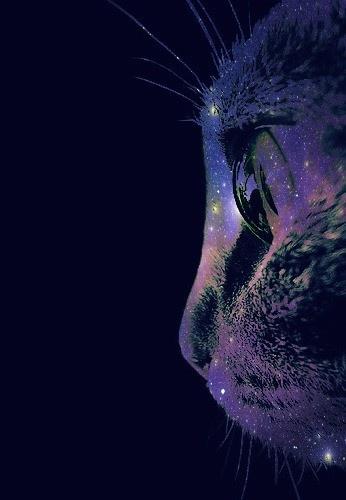 cat galaxy                                                                                                                                                                                 Mais